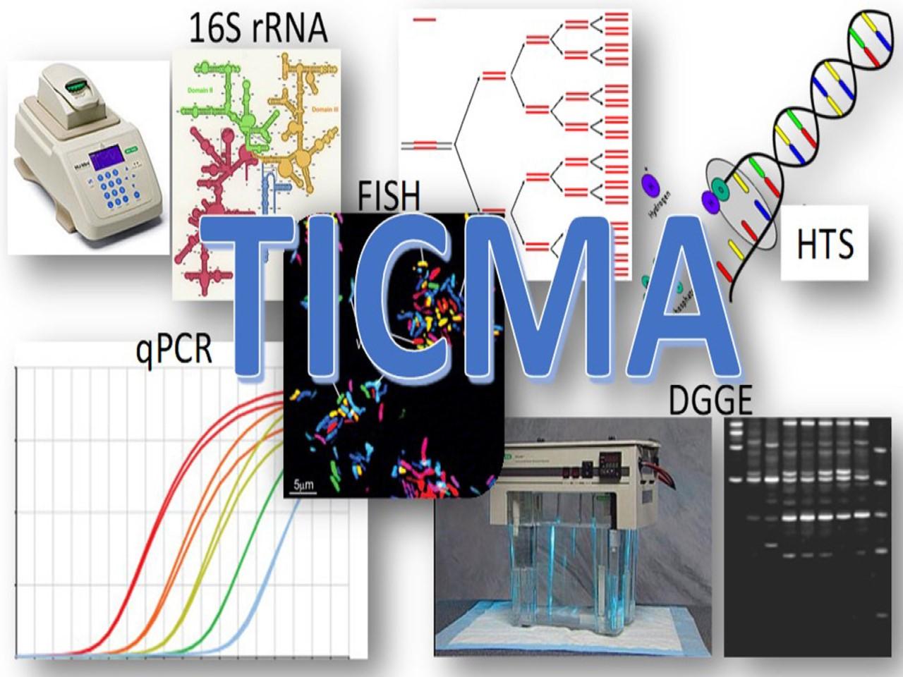 Técnicas Independientes de Cultivo en Microbiología de los Alimentos (TICMA)